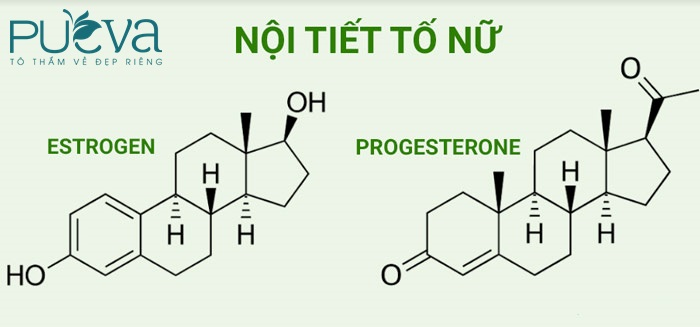 Cân bằng estrogen và progesterone
